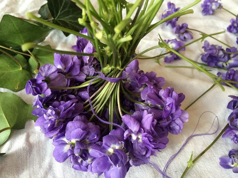 violette-de-toulouse